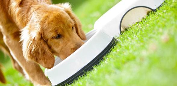 Two Pet Food Recalls