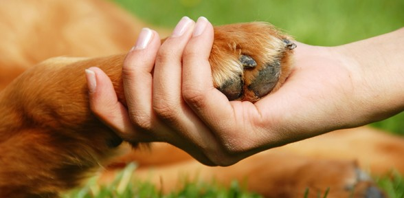 Ten Tips To Keep Your Dog Super Healthy