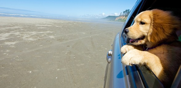 Holiday Travels And Your Pet