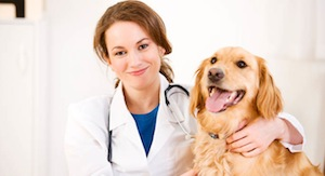 dog_and_vet1