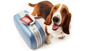 In Home Pet Sitter Melbourne Florida