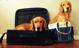 dogs suitcase