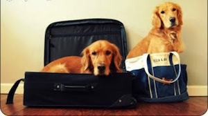 Do You Travel A Lot? Let Us Help!
