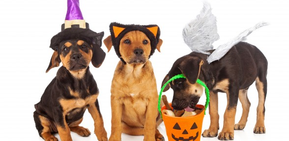 Pet Costume Contest!