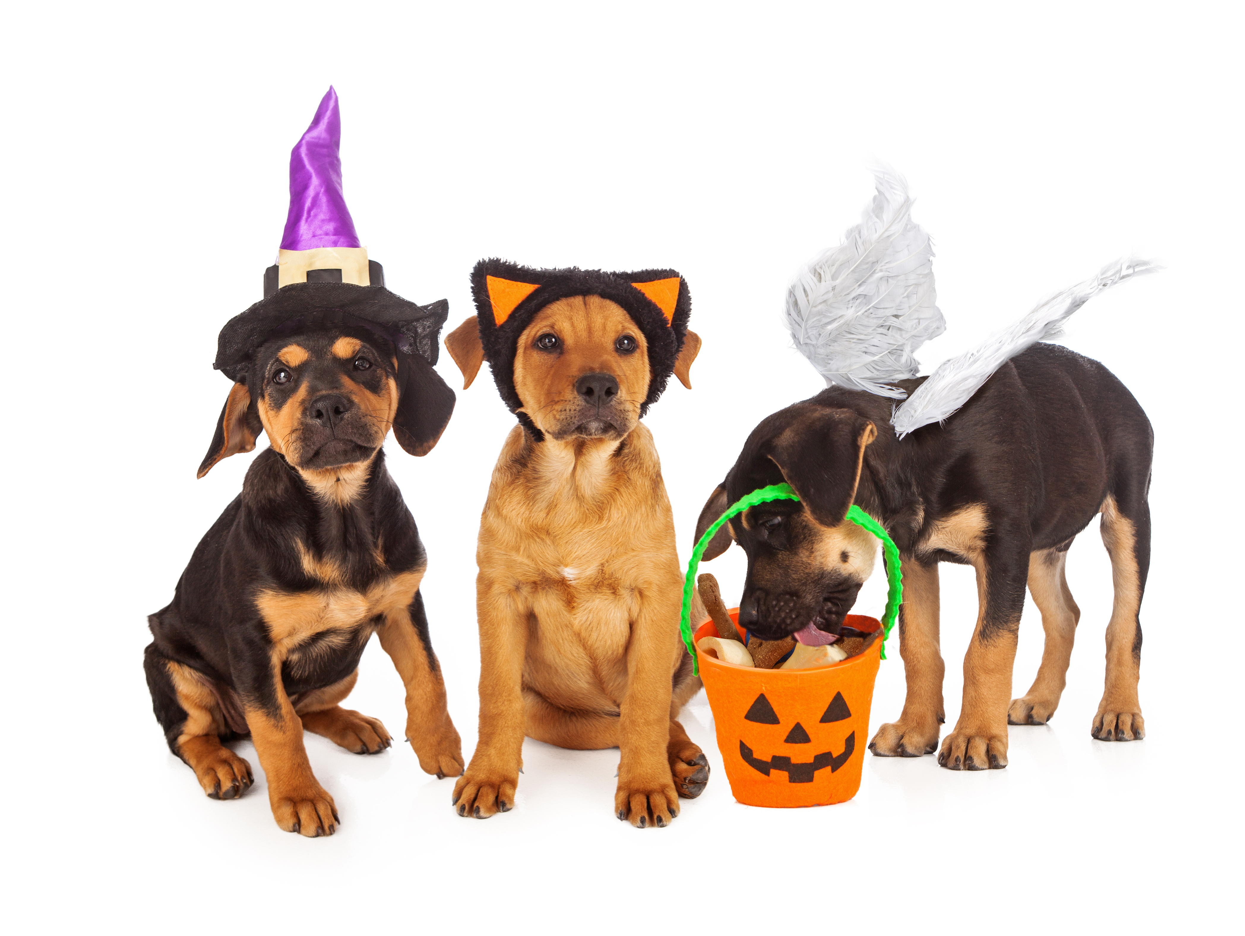 Image result for cats Halloween