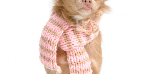 Cold Weather Tips for Pet Owners
