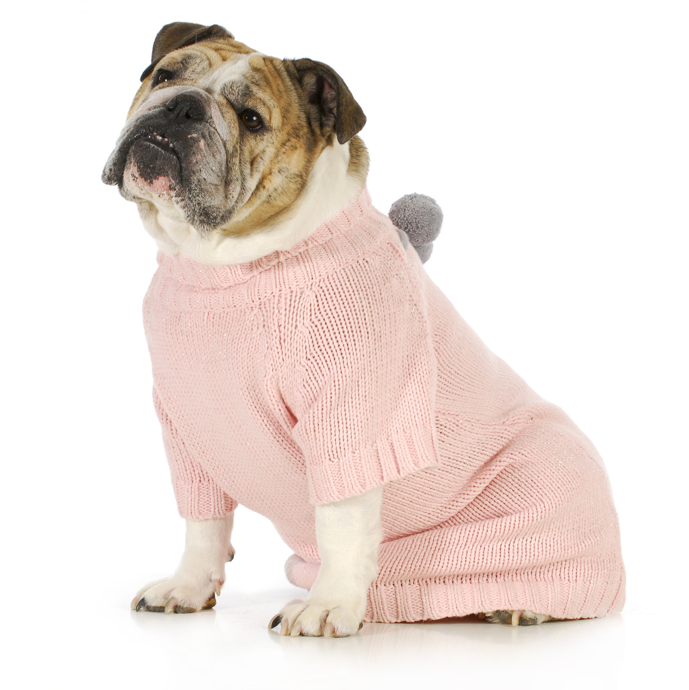 Dress up your pet day - Celebrate National Dress Up Your Pet Day In January Dog Wearing Sweater