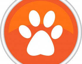 Orange paw print button
