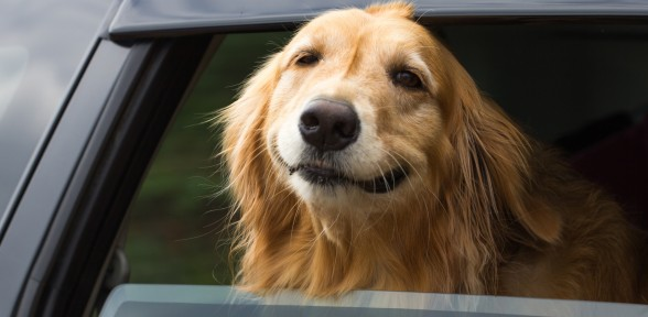 Tips For Surviving The Dog Days Of Summer With Your Dog