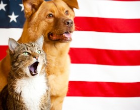 Dog and cat with US flag