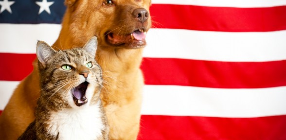 Celebrating A Happy And Safe Fourth Of July With Your Pet
