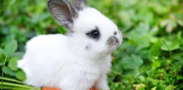 Small Pets? No problem!