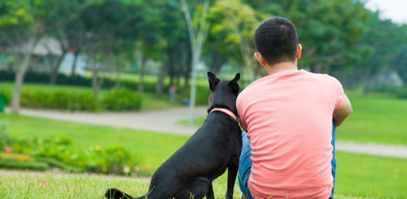 Three Tips For Training Your New Puppy