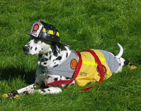in home pet sitters melbourne florida national fire pup day