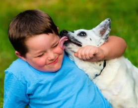 In Home Pet Sitters Melbourne Florida Pet Sitting