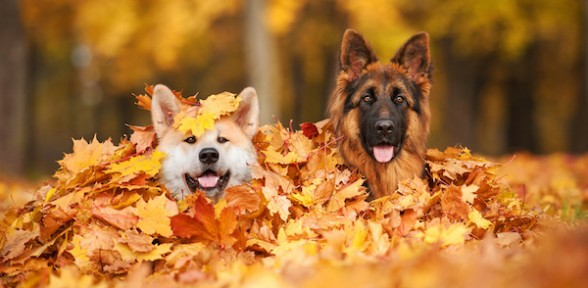 Thanksgiving Travels? Think In Home Pet Sitters