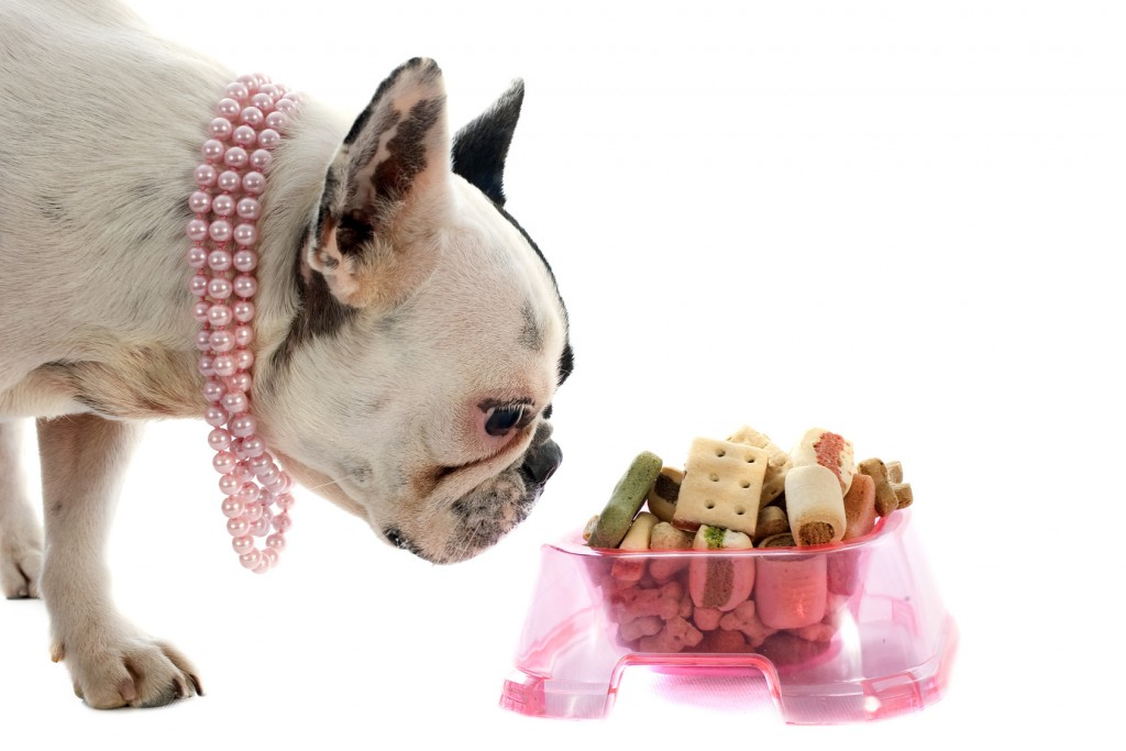 dog in pink pearls, bull dog
