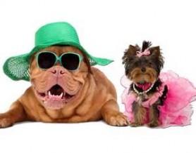 Dress Your Pets