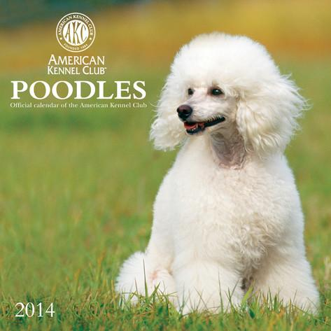 poodles-american-kennel-club-2014-calendar